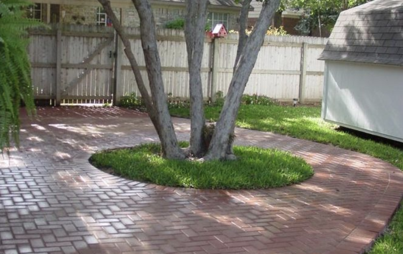 Best patio trees